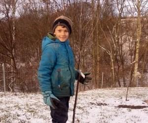 Robins gepflanzter Baum