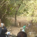 Indien Ranthambore NP