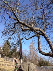 Altbaum ungeschnitten