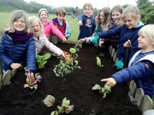 Anlegen von einem Schulgarten